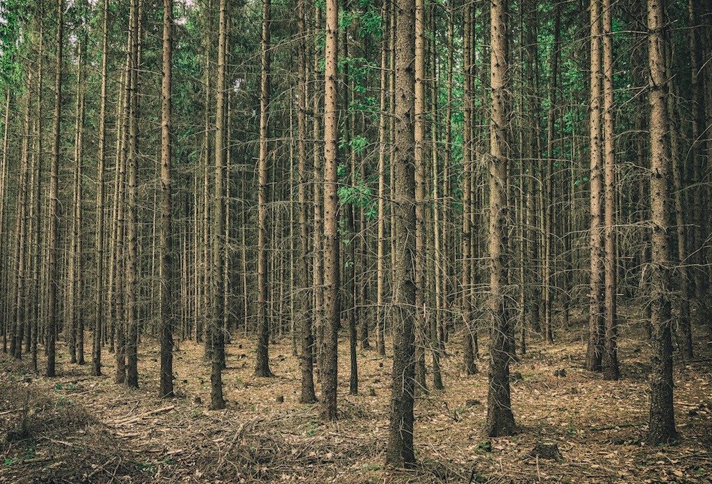 Wood_Small