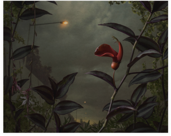 Daniel Shipp 'Botanical Inquiry'