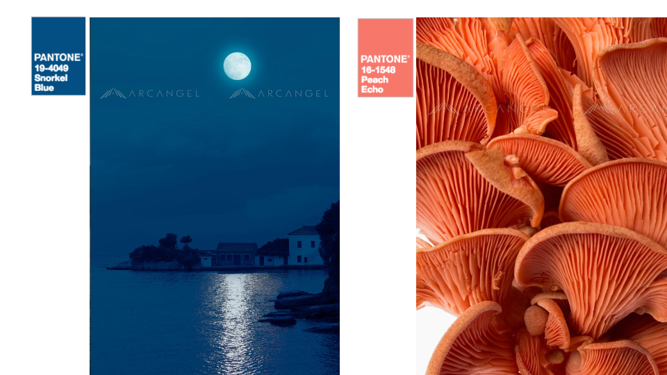 Snorkel Blue + Peach Echo