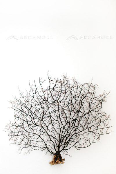 AA1723196