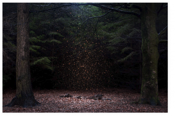 Ellie Davies - Into The Woods